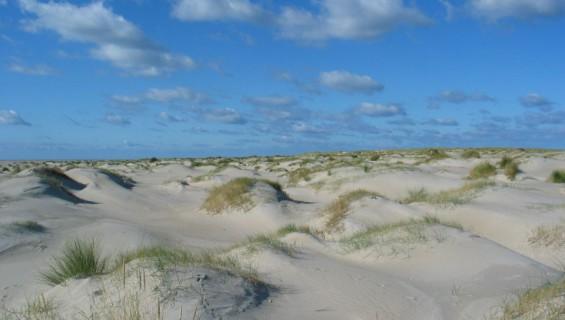 Beleef de duinen (1,5 km)