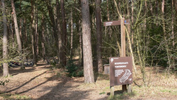 8. Picknicken in het bos