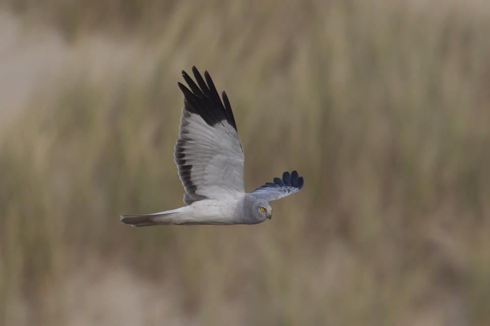 Vogelexcursie XL