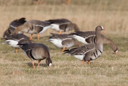 Texel Vogeleiland van Allure 2017