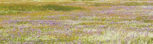 Der Slufter in lila