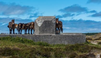Hans Viveen wint met paarden bij Bunker Bollekamer