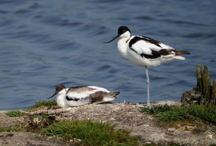 Meer weten over de zes typisch Texelse trekvogels?